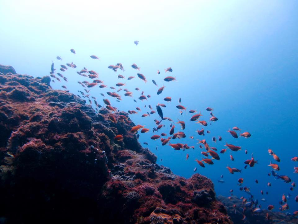 八丈島ダイビング