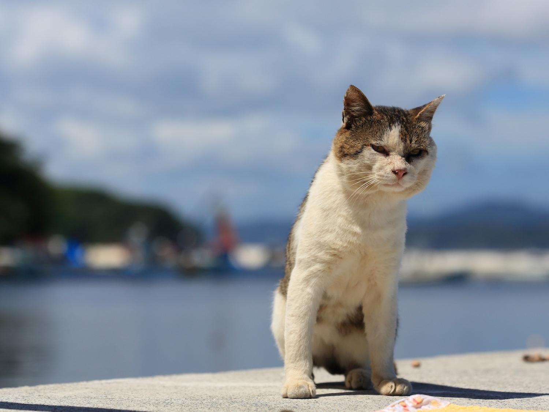 宮城・田代島の猫